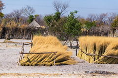 Mud straw and wooden hut with thatched roof in the bush. Local village in the rural Caprivi Strip, the most populated region in Na Royalty Free Stock Image