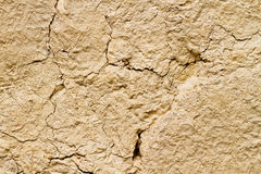 Mud texture Stock Photography