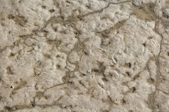 Mud Texture Stock Images