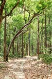 Mud track route through the dense forest of Jim Corbett Stock Photo