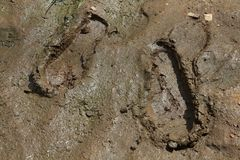 Mud tracks. Shoe prints in mud. Muddy soil footprint Royalty Free Stock Images
