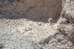 Mud Volcano at Yellowstone National Park Wyoming USA Stock Photography