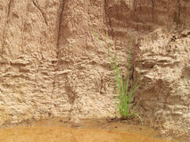 Mud Wall Stock Photos