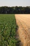 Mudança da colheita Fotos de Stock Royalty Free