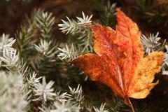 Mudança da cor do outono imagens de stock