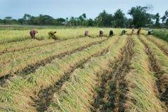 Mudança de clima na agricultura Imagens de Stock Royalty Free