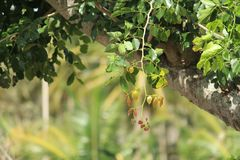Mudança de cores das folhas foto de stock