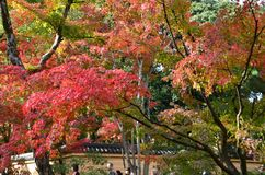 Mudança Japão da cor das folhas de Kinkakuji imagem de stock