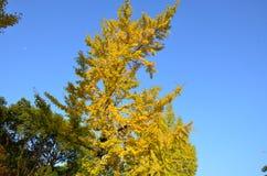 Mudança Japão da cor do outono imagens de stock