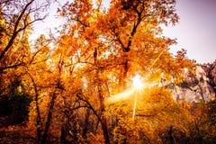 Mudança ocidental sul épico das árvores da queda do Arizona da cor, Sedona fotos de stock royalty free