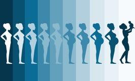 Mudanças no corpo de uma mulher na gravidez, fases da gravidez da silhueta, ilustrações do vetor Foto de Stock Royalty Free