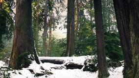 Mudanza con el invierno bonito Forest In Snow almacen de video