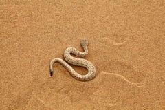 Mudanza de la serpiente del traqueteo del Sidewinder Imagen de archivo
