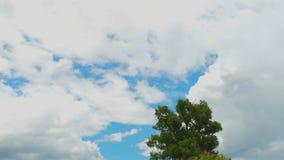 Mudanza de las nubes de lluvia sobre el árbol en la estación de lluvias almacen de metraje de vídeo