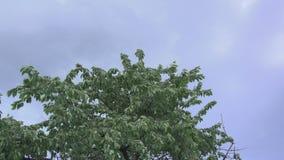 Mudanza de los árboles salvaje metrajes
