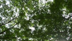 Mudanza debajo de árbol verde del follaje contra luz del sol almacen de video