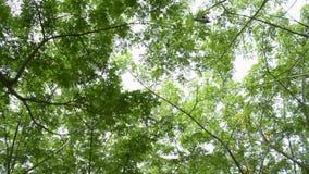 Mudanza debajo de árbol verde del follaje contra luz del sol almacen de metraje de vídeo
