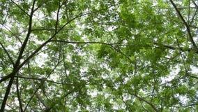 Mudanza debajo de árbol verde del follaje contra luz del sol metrajes