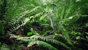 Mudanza debajo de helechos en bosque metrajes