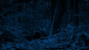 Mudanza a lo largo de Forest Floor At Night almacen de video