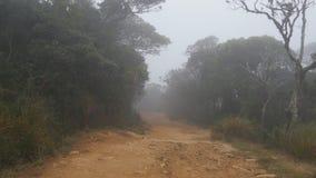 Mudanza a lo largo de la trayectoria de la montaña entre el paseo tropical de Point of View del bosque a través de la trayectoria metrajes