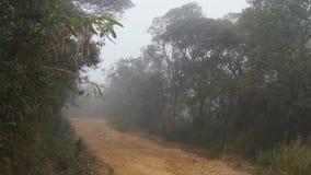 Mudanza a lo largo de la trayectoria de la montaña entre el paseo tropical de Point of View del bosque a través de la trayectoria almacen de video