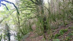 Mudanza por la trayectoria a través del bosque místico salvaje almacen de metraje de vídeo