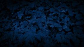Mudanza sobre Forest Floor At Night frondoso metrajes