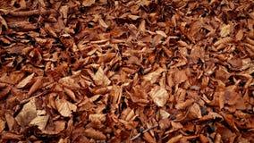Mudanza sobre la manta gruesa de hojas caidas metrajes