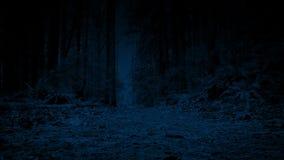 Mudanza a través de Forest Path At Night almacen de metraje de vídeo