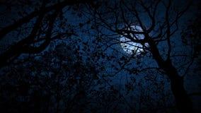 Mudanza a través del bosque asustadizo que mira para arriba la Luna Llena almacen de video