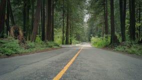 Mudanza a través del camino a través del bosque