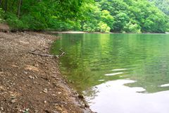 Muddy banks and lake surface in a forest Stock Photo
