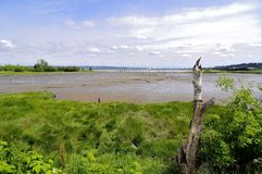 Muddy Bay in springtime Royalty Free Stock Image