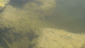 Muddy bottom of the lake stock video footage