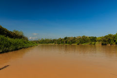 Muddy brown oxbow lake in the jungle Royalty Free Stock Photos