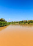 Muddy brown oxbow lake in the jungle Royalty Free Stock Images