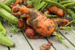 Muddy carrot Stock Image