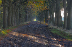 Muddy country road Royalty Free Stock Image