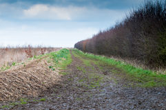 Muddy country road Stock Photography
