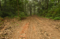 Muddy dirt road and forest at Doi Pha Hom Pok mountain in Thailand Royalty Free Stock Image