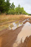 Muddy dirt road next to pine plantation Royalty Free Stock Images