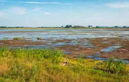 Muddy Dutch-Naturreservat in der Sommerzeit Stockfoto