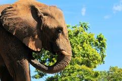 Muddy Elephant Stock Photography