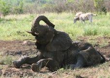 Free Muddy Elephant Royalty Free Stock Image - 5232806