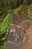 Muddy eroded trail, Oregon. Muddy eroded hiking trail, Oregon stock photo