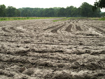 Muddy farm field. Plowed wet muddie farm field Royalty Free Stock Photos