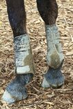 Muddy Feet Stock Photos