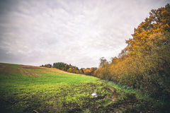Muddy field with a puddle in the fall Royalty Free Stock Image