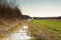 Muddy, field road and a field of winter wheat in March, landscap Stock Photos